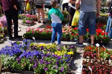Vente de plantes sur les marchés et sur les foires près de Tarbes